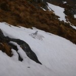 Ptarmigan, on the approach to the Forcan Ridge