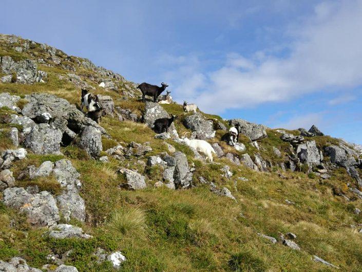Aonach Eagach - The Notched Ridge